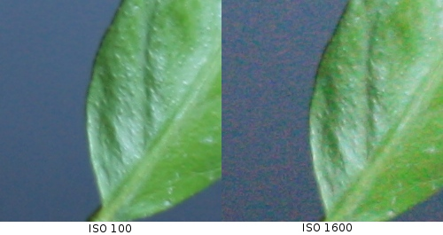 ISO 100 and 1600