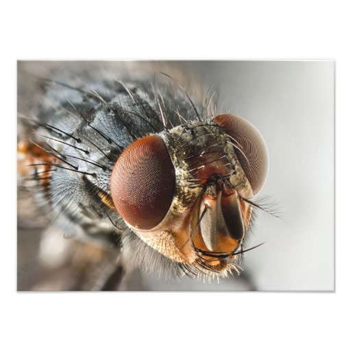 Photography of a fly